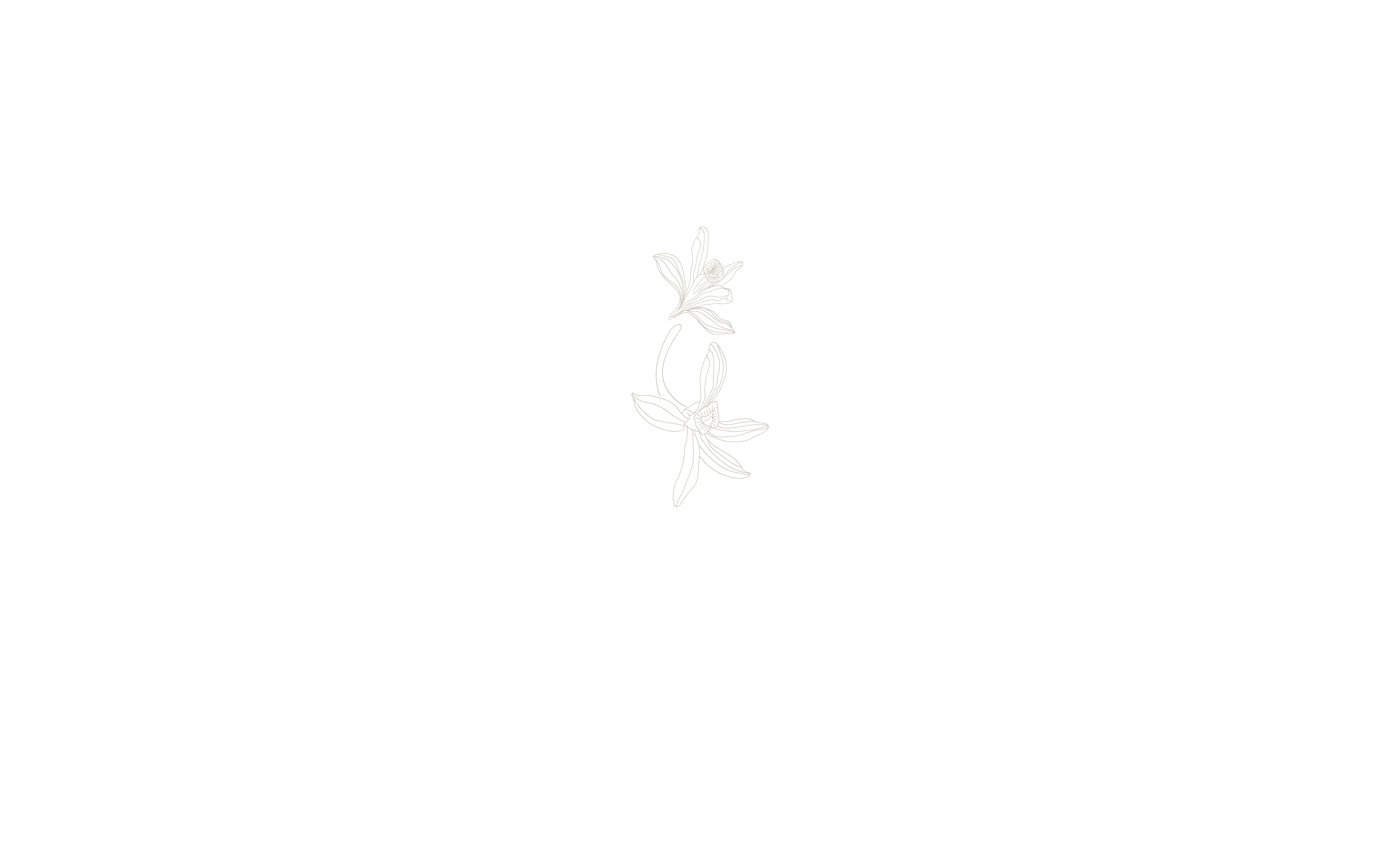 Vanilla Silk Logos – jpg2